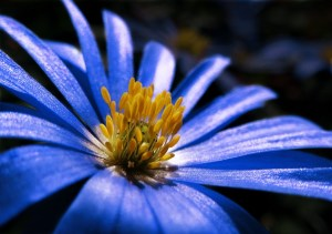 Blue stimulates your brain. It aiding concetration and clears distracting thoughts. So you get more productive.