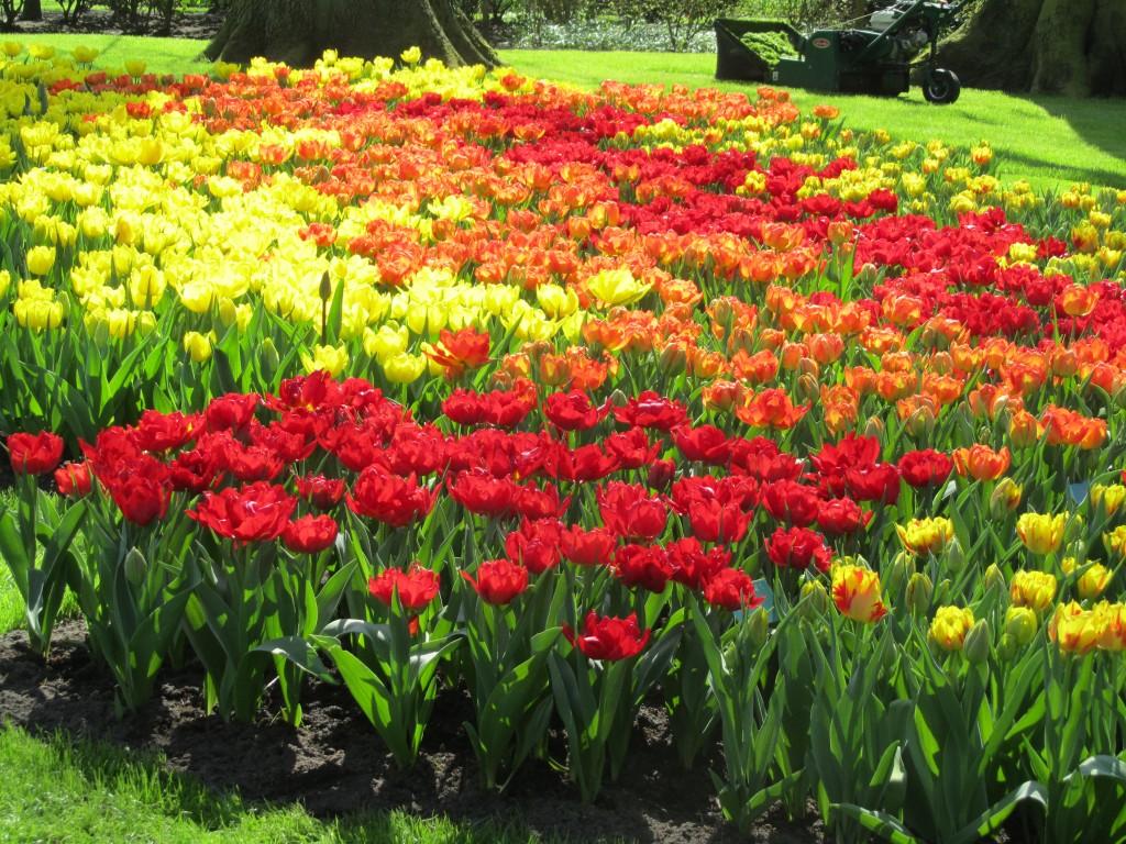 Inspiring Images Kuekenhof Gardens Tulips