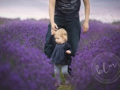 lavender fields banstead