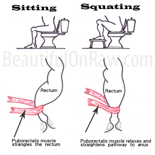 Toilet Positions