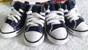 """Dog Canvas """"Converse"""" strap Style Sneakers Shoes – Beautiful Puppy ... 02c4377b148c"""