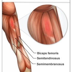 Horse Muscle And Bone Diagram Vdo Tach Hour Meter Wiring Injury Report: Hamstring Strains - Beautiful To The Core