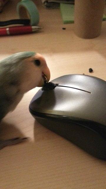 vriendje muis