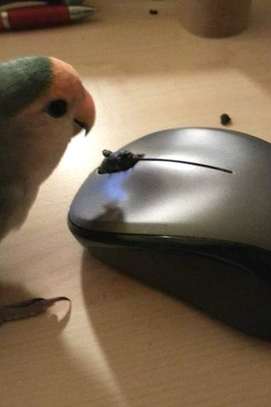 vriendje sloopt muis