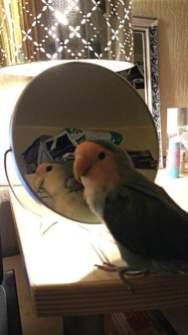 vriendje spiegel 2