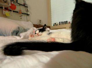 Let me sleep!