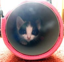 Sewer cat