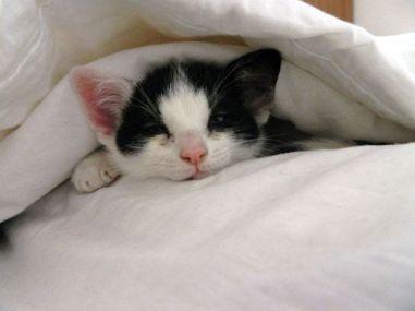 onder de dekens verstopt