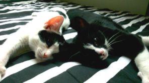 samen op bed, marie en toulouse