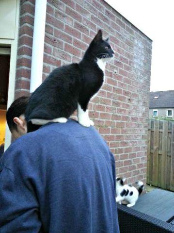 Fijne schouder van Tom!