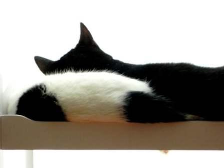 marie en toulouse slapen in poppenbed