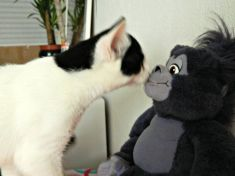Kiss the monkey