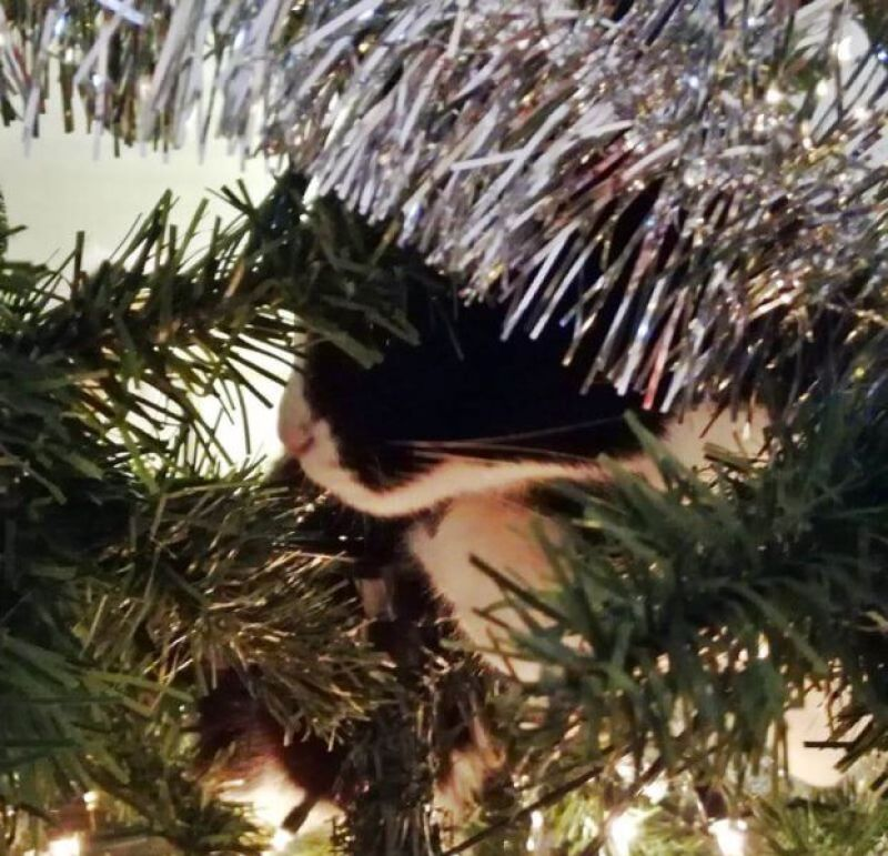 toulouse kerstboom 2017