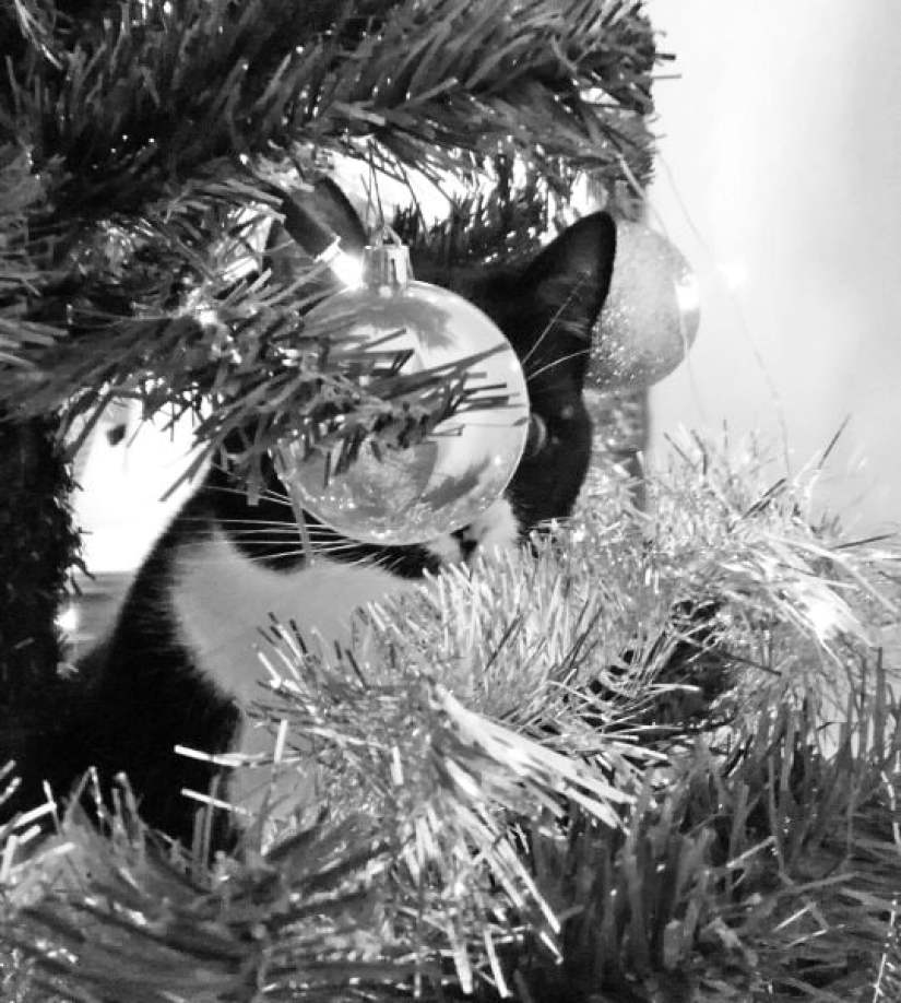 toulouse kerstboom