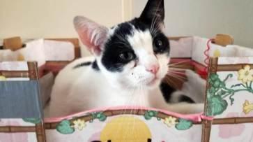 kattenflat (2)