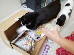 ECOstyle Kittenpakket (7)