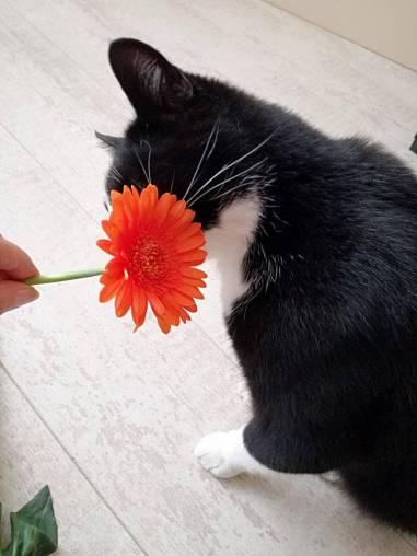 toulouse bloem