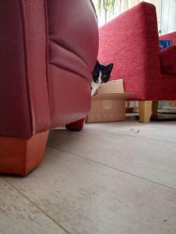 Zie je mij? Ik heb mij goed verstopt, hè?