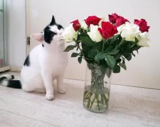 Dol op bloemen!