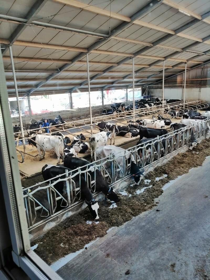 KeeK op de WeeK 27- Hangmat voor je nek, Hoes voor je Bloes & IJsjes eten tussen de Koeien... 17 neck hammock KeeK op de WeeK 27- Hangmat voor je nek, Hoes voor je Bloes & IJsjes eten tussen de Koeien...