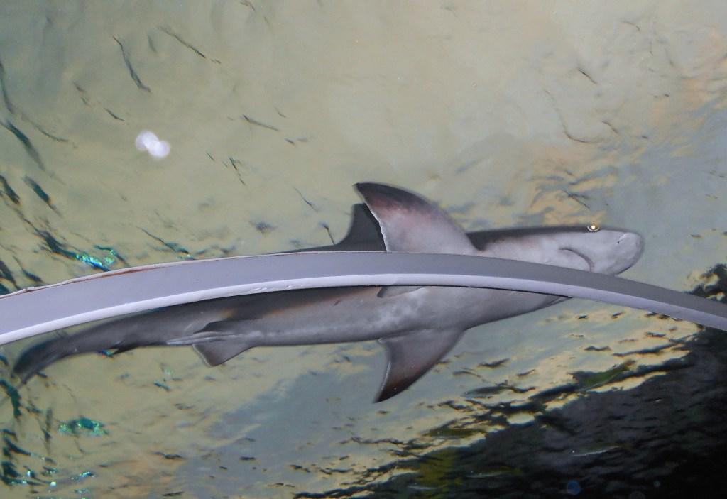 SHARK BAIT, SHARK BAIT! ;)