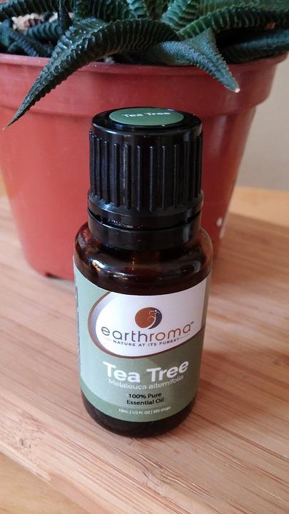 Tea Tree Essential Oil Pixbay Image