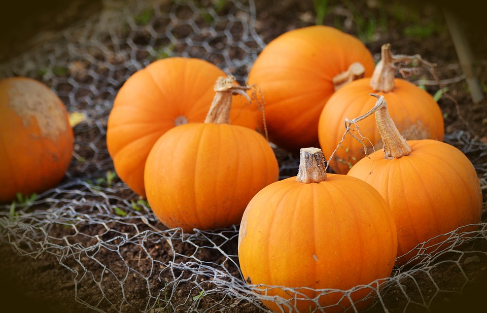 pumpkins-Pixabay-photo-for-special- pumpkin-bars