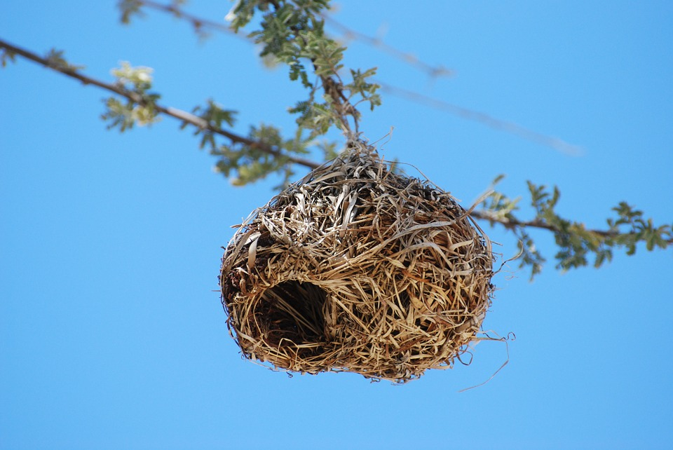 ingenuity of a sparrow nest