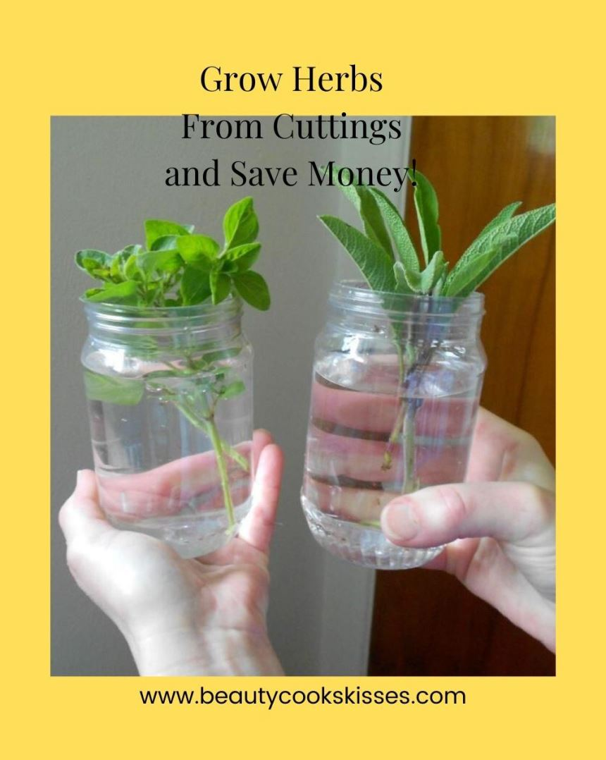 Grow Herbs From Cuttings and Save Money