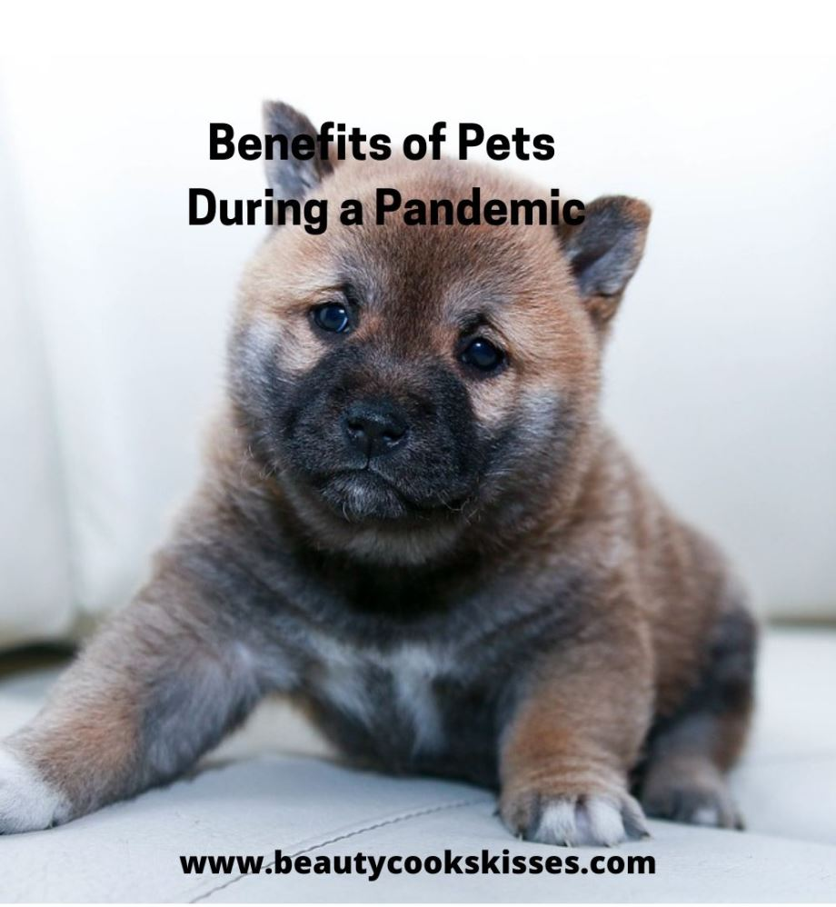 Benefits of Pets Puppy