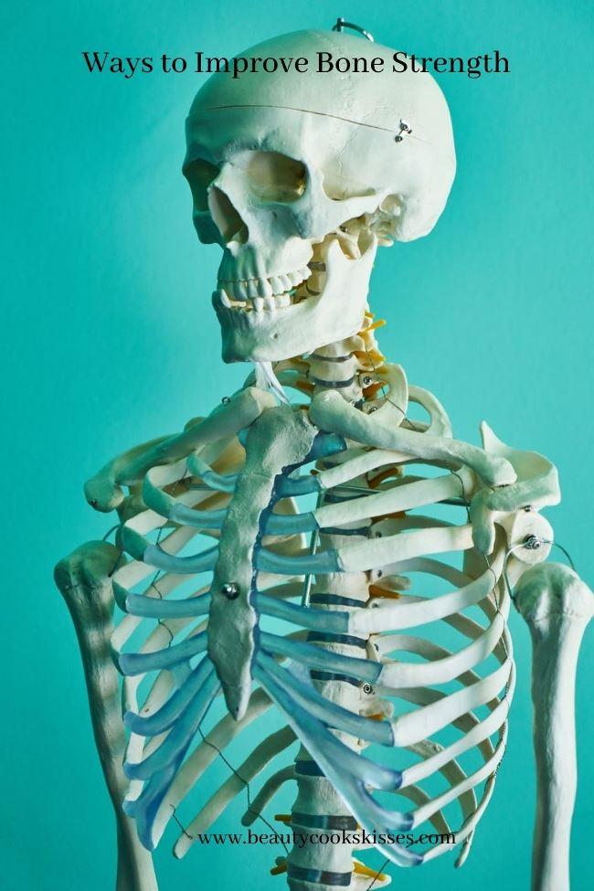 Bone-Strength-Skeletal Bones