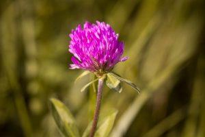 wild-herb-pesto