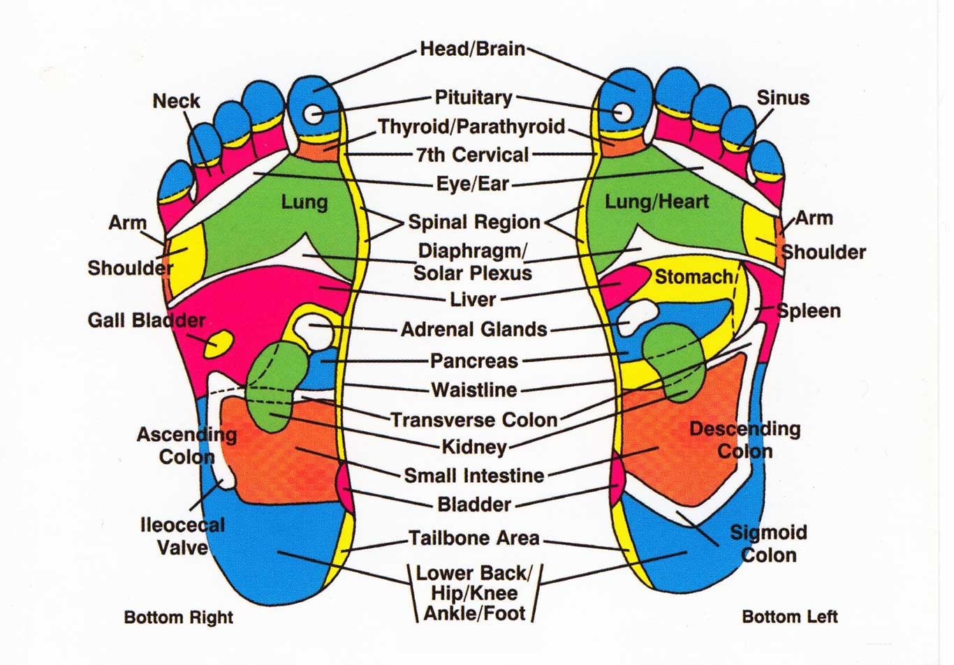 foot massage therapy diagram volkswagen t5 wiring reflexology and your body how everything is connected