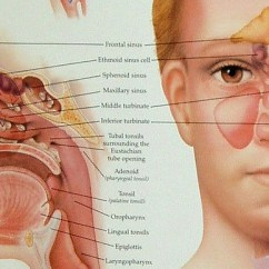 Simple Human Eye Diagram 1999 Mustang Gt Stereo Wiring Proven Tips To Avoid And Cure Your Sinus Infection Naturally