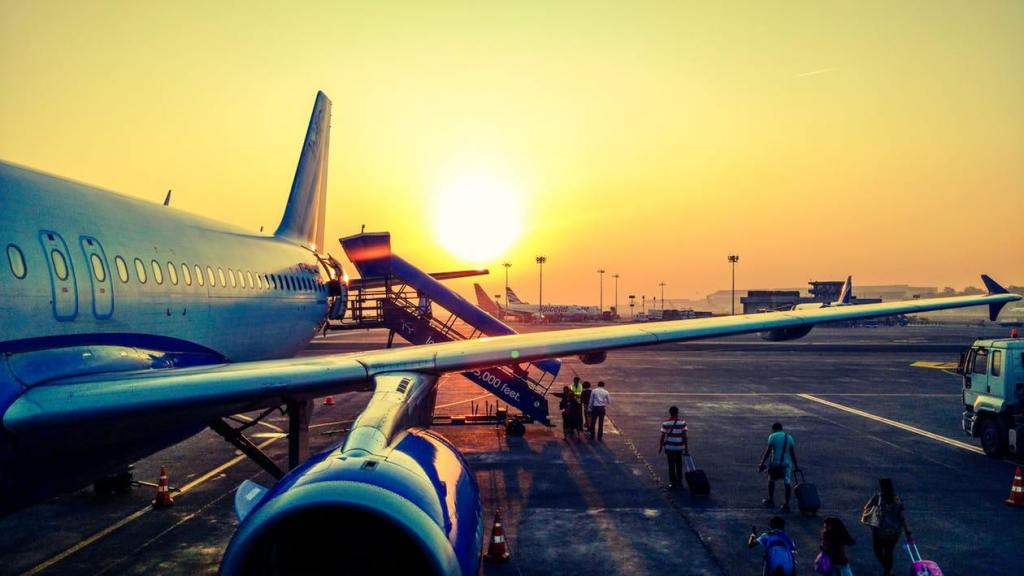 airline, traveling with pet, airline fees, vacation