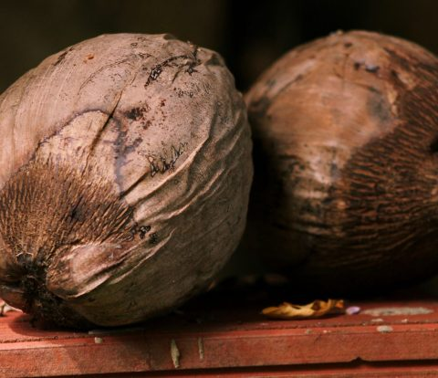 dry coconut oil