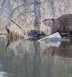 beaver solutions [ 2000 x 890 Pixel ]