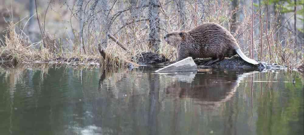 medium resolution of beaver solutions
