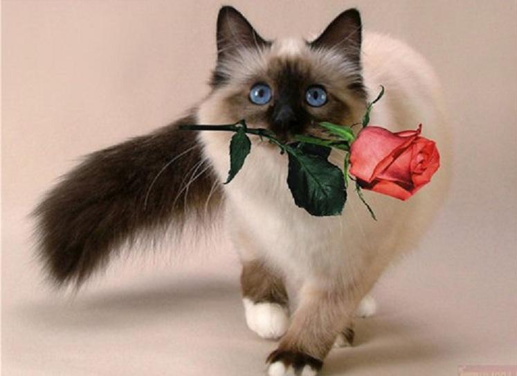 Image result for mačka