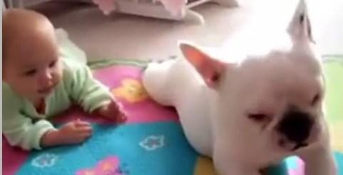bebe-a-ser-ensinado-a-gatinhar-por-um-cachorro