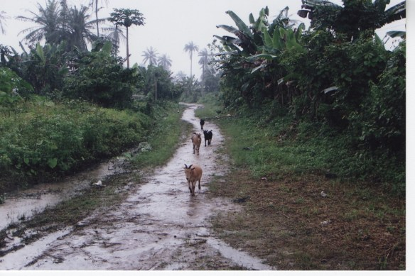 Chief Professor Scott Pegg Road with four native goats on it in 2005.