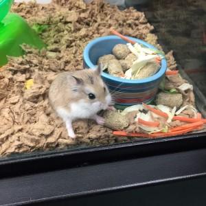 Robo Hamster :)
