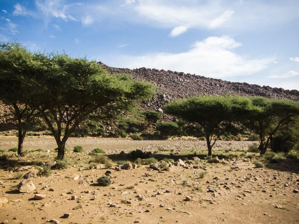 Akazien in der Geröllwüste