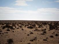 Geröll-Gestrüpp-Wüste