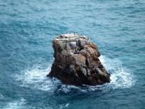 Brutfelsen im Meer.