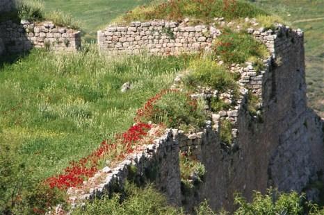 Mohnblumen auf Ruinen