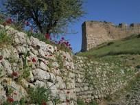 Mohnblumen vor Wehrturm
