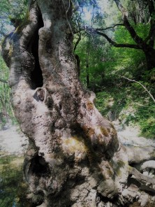 Hohl-Baum