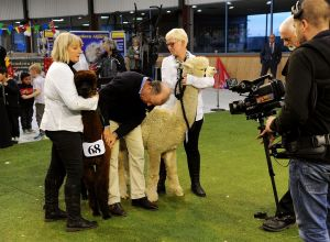 It's down to Beck Brow On The Money and the eventual Supreme Champion Bramble Lodge Thornset.