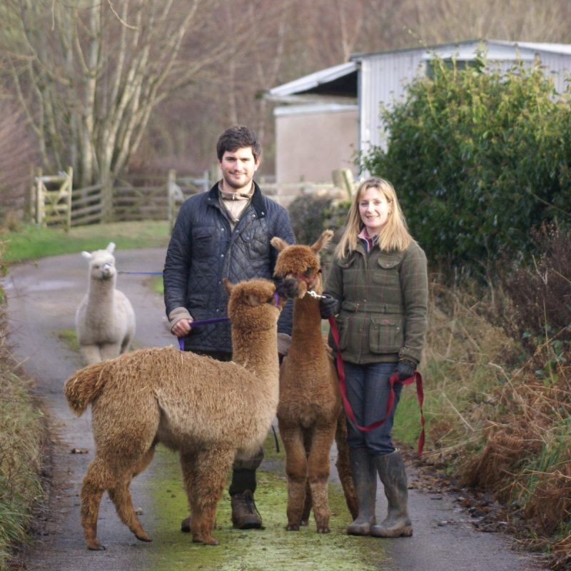 A New Era for Beck Brow Alpacas…